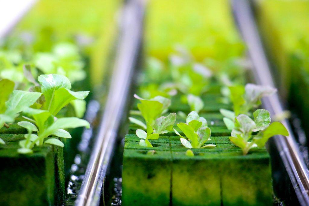 hydroponics, farmland, green